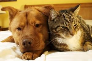 Les maladies que nous partageons avec nos animaux