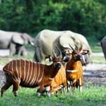 Le top 5 des parcs nationaux de la Côte d'Ivoire