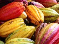 Coup de projecteur sur la transformation de la production de cacao, de l'économie rurale et du secteur énergétique au Ghana à l'occasion de la visite d'Akinwumi Adesina