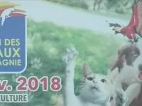 Cérémonie de lancement du 1er salon des animaux de compagnie d'Abidjan