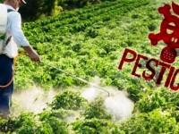 Gestion des pesticides obsolètes en Côte d'Ivoire: Le PROGEP-CI pour une politique du pollueur payeur